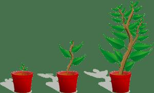 plante en croissance